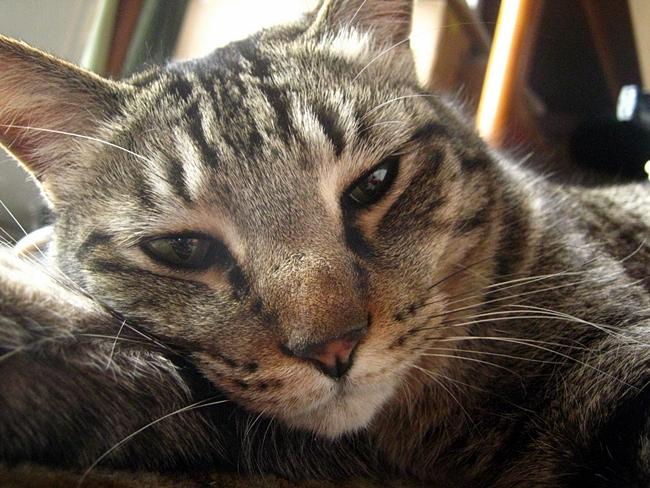 現実は小説より奇なり!猫を飼ってみて分かった事と、獣医さんに見てもらって発覚した真実