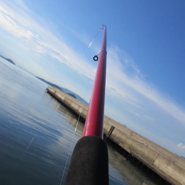素人でも忙しいくらい釣れる一本針仕掛け サヨリ釣り(;^ω^)o/――~>゚))))彡