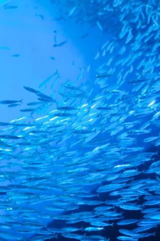 2013年版!一度は行って見たい日本全国水族館ホームページリスト