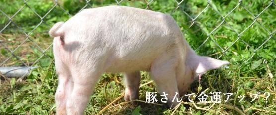 豚さんで金運アップ