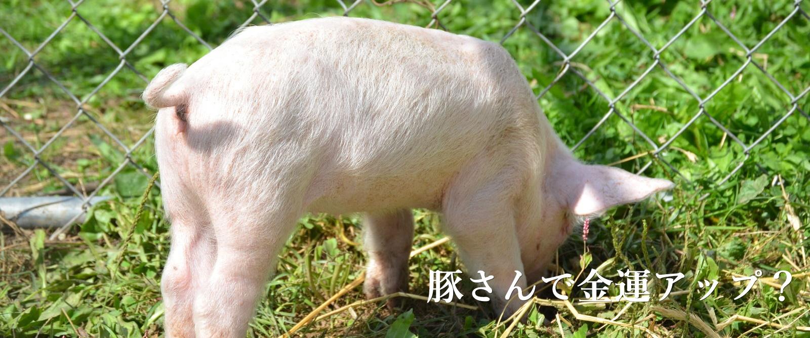 豚の夢を見たら宝くじを買えっ!何で豚が金運アップなのか調べてみた
