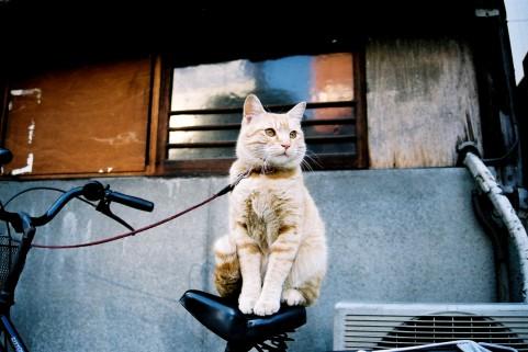 自転車に乗るとお尻が痛い現象を克服する唯一の方法