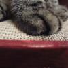 そこで爪を研ぐなっ!猫の爪とぎに困ったので、ガリガリウォールを試し買い