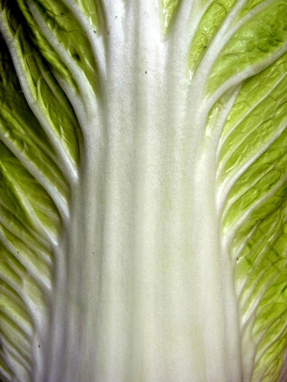 今がチャンス!秋白菜、苗の値段が半額に落ちてた