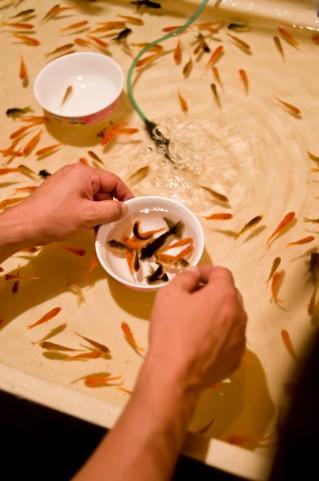 金魚すくい実践