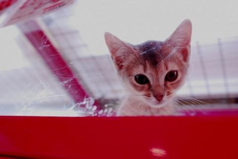 体育祭での猫耳ハチマキ画像と作り方がツイッターで話題にっ!