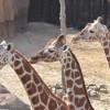 2013年版!全国の動物園のホームページ一覧